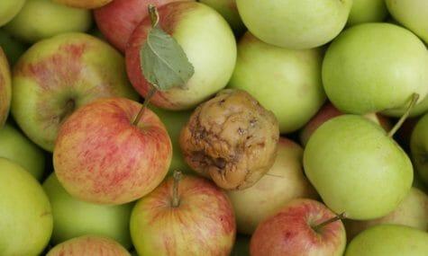 Public Perception Reputation bad apple in the marketing